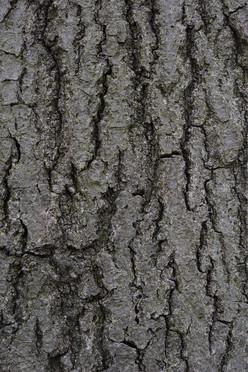 Tree7_1660.jpg
