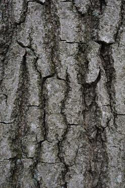 Tree17_1526.jpg