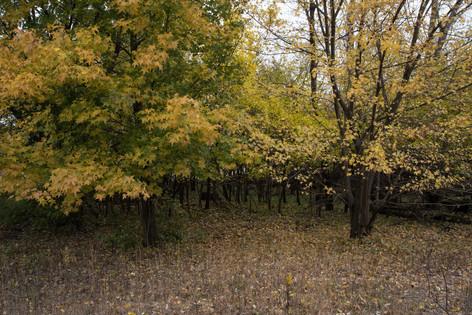 Mound [4411]