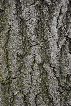 Tree5_1679.jpg
