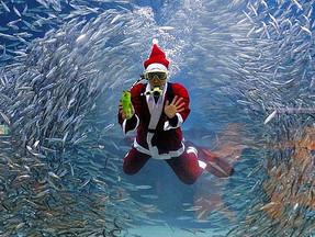 Готовимся к Подводному Карнавалу или встретим Новый Год по дайверски!