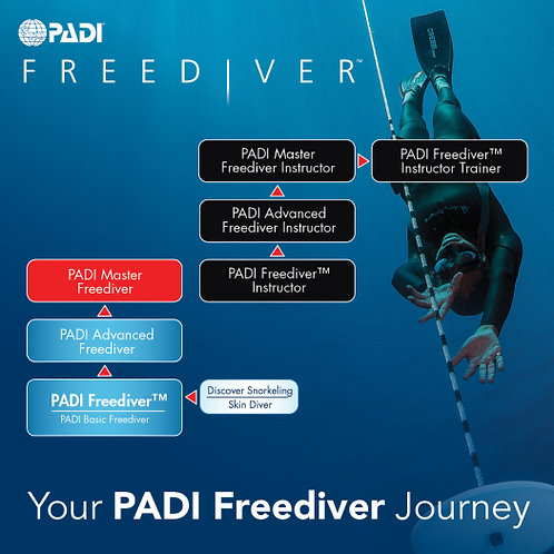 Курс PADI Basic Freediver