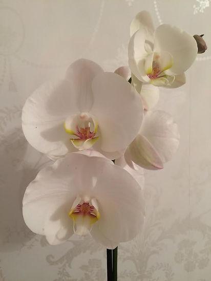 Orchid relaxing reflexology