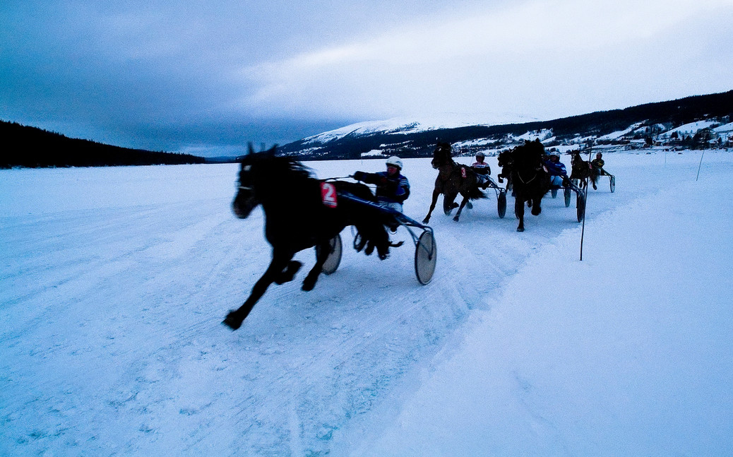 Trotting racing up north / Sweden