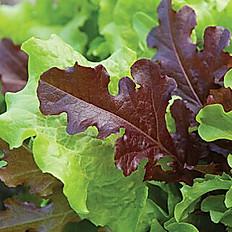 Lettuce, Loose Leaf Mix