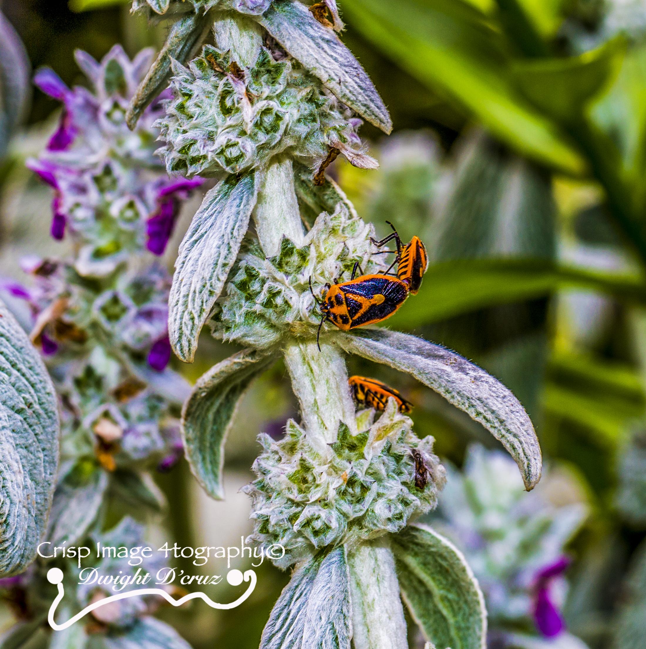 Amazing Bugs