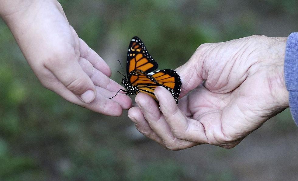 Butterfly senior hands_edited.jpg