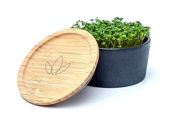Kuzma Anthracite Microgreens Set