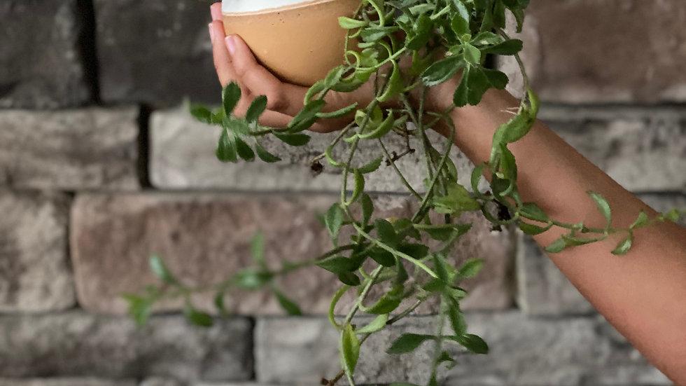 Orb Planter