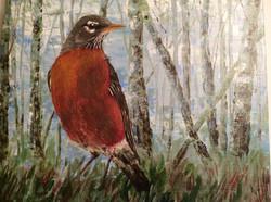 Robin in Aspen