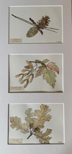Trio of Manitoba Leaves