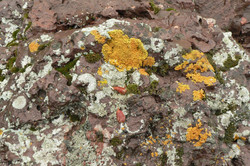 If Moss and Lichens Can Get Along....why can't we?