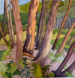 Cedars at Assiniboine Park