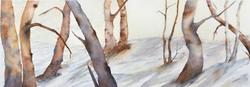 Winter Prairie Grove