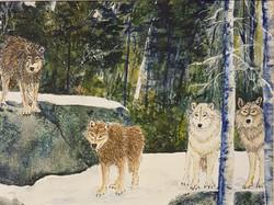 Whiteshell Wolves