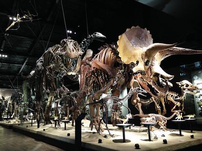 恐竜進化大行進