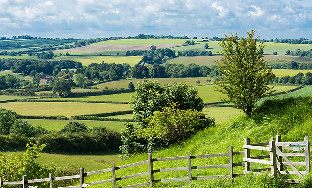 Sunshine-Green-fields-trees-hedges-count