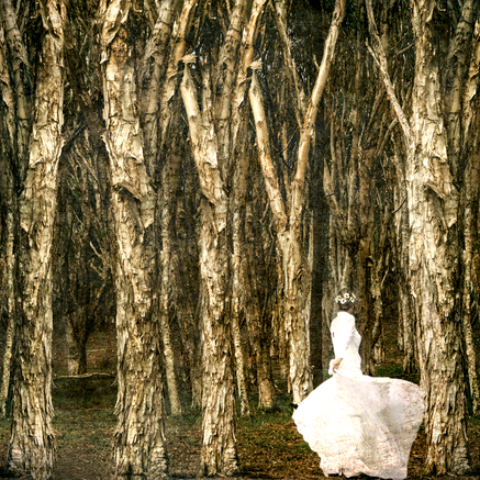 Dance in the Arms of the Woods