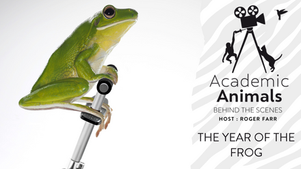 Academic Animals | Behind the Scenes - The Year of the Frog