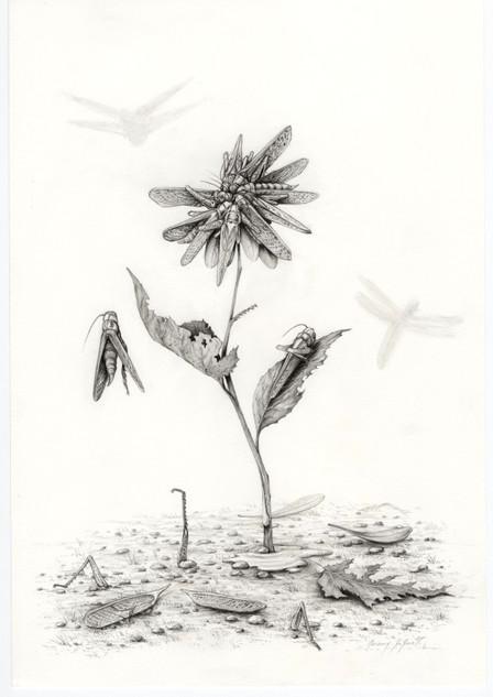 Une fleur d'apparence
