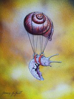 Escargot volant 2