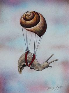 Escargot volant 5