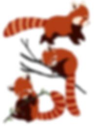 Red Panda School Workshops UK