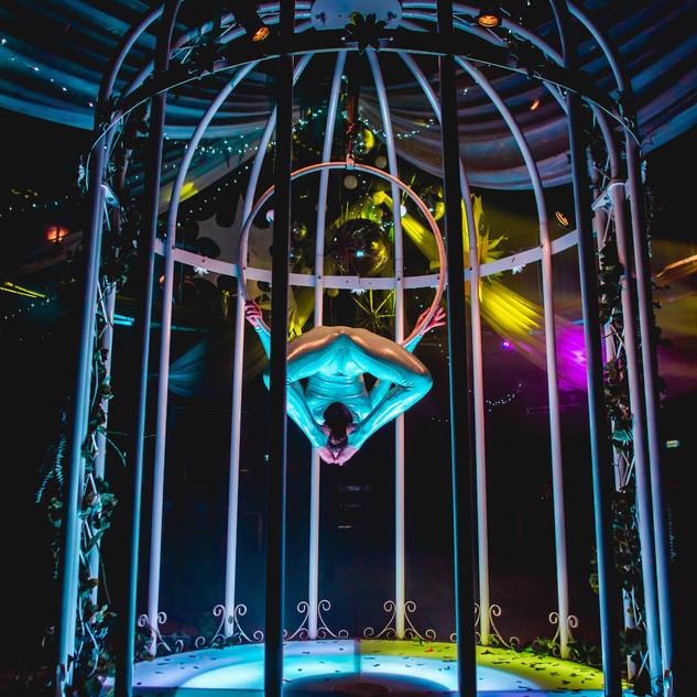 Giant Bird Cage uk