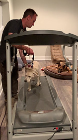 Exercise is good for pups