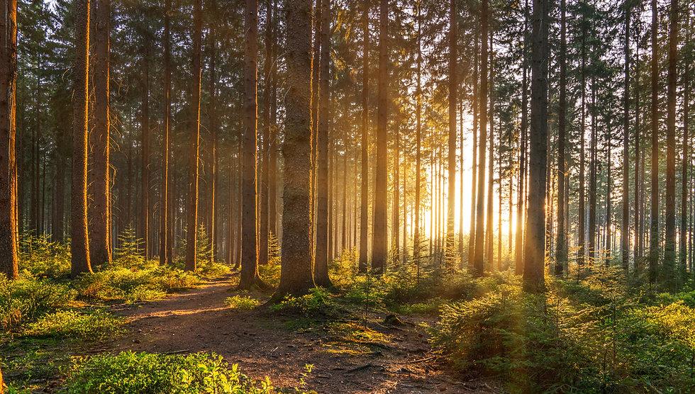 Wald - Adobe Photo.jpeg