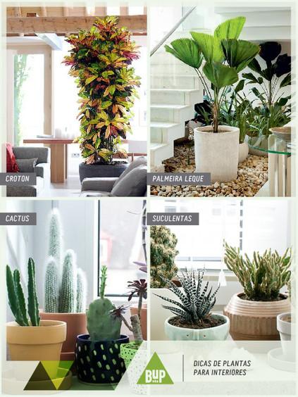 #DicadaBUP: Plantas para ambientes internos