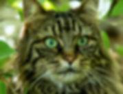 Pressefoto_Planet_a_Katzen_KatzeLea01.jp