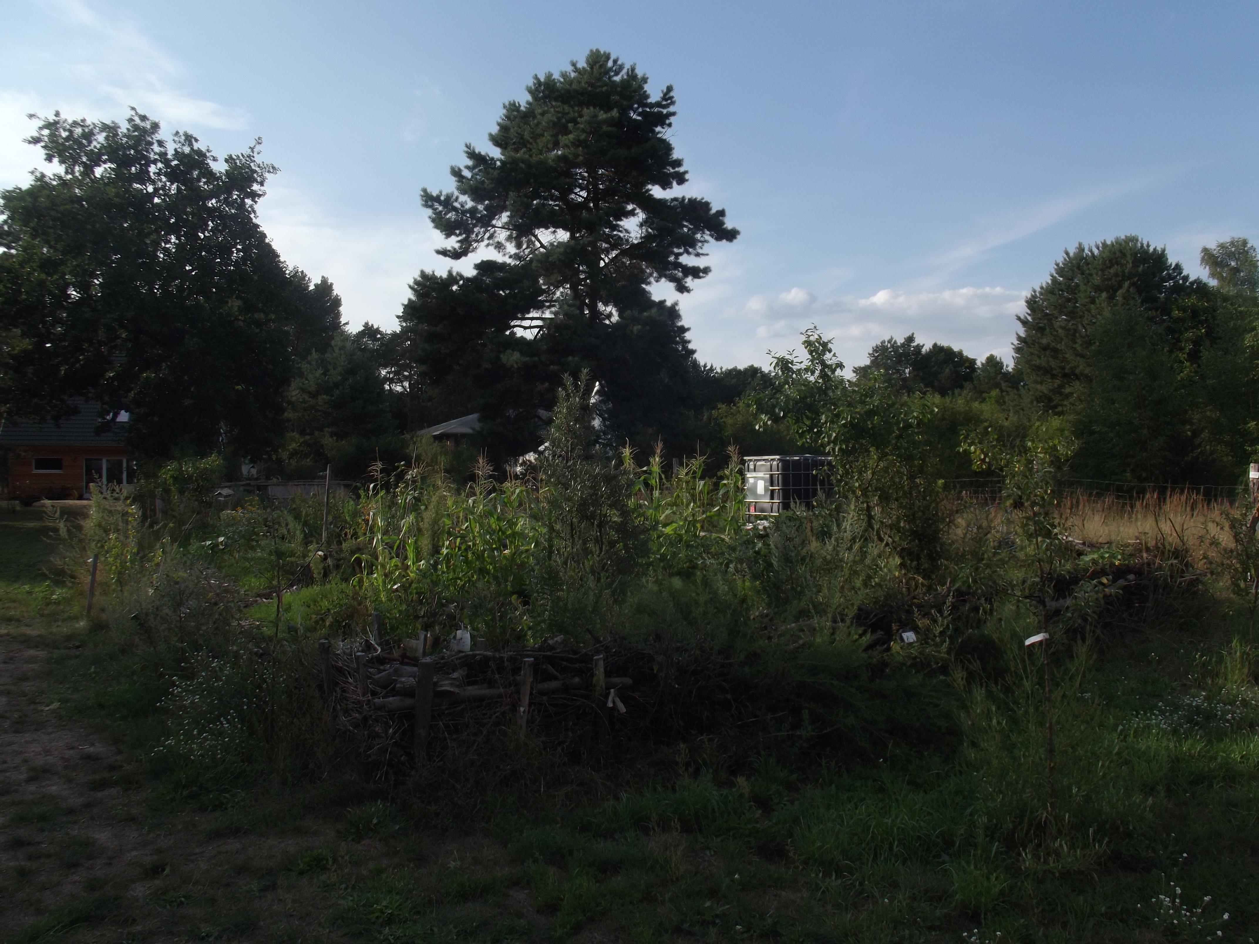 Blick auf Anbaufläche