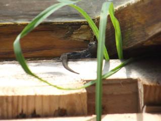 ...noch mehr Amphibien