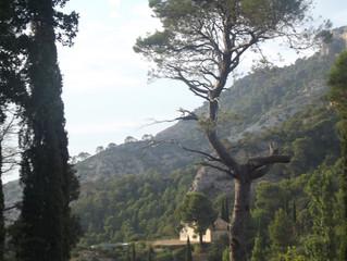 Gartenplanungs-Workshop in Spanien
