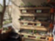nino permakultur berlin wandgarten, Permakultur, Permaculture, Berlin, Permakultur Berlin, Permaculture Principles