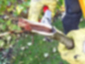 nino permakultur berlin obstbaum