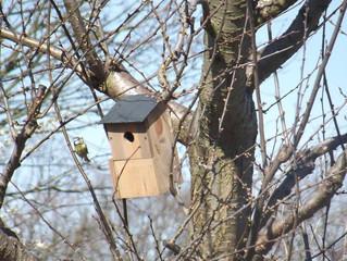 Vogelbrut = Nützlinge