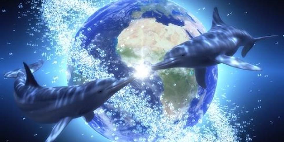 עולם המים וסודותיו פותח בפנינו את שעריו בריף הדולפינים אילת