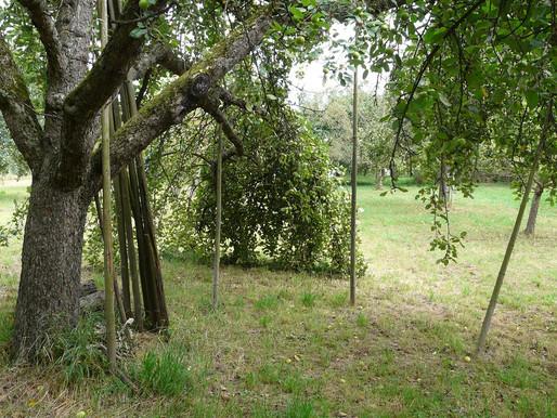 Obstbäume stützen (August)