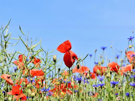 Natürliche Blumenwiese (April)