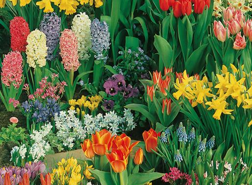 Zwiebel- und Knollenblumen im Mai
