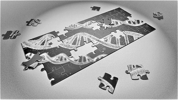 généalogie génétique
