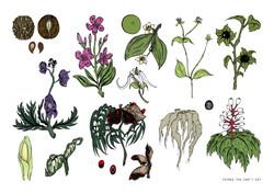 Plants 72