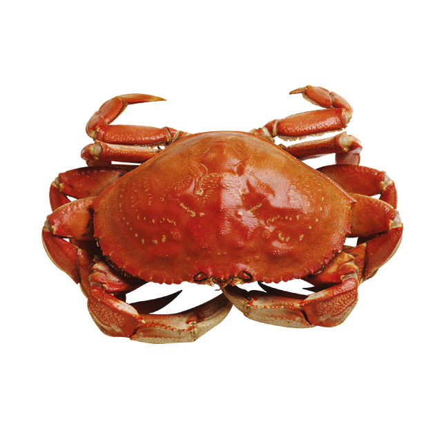 Crab from Hartlepool