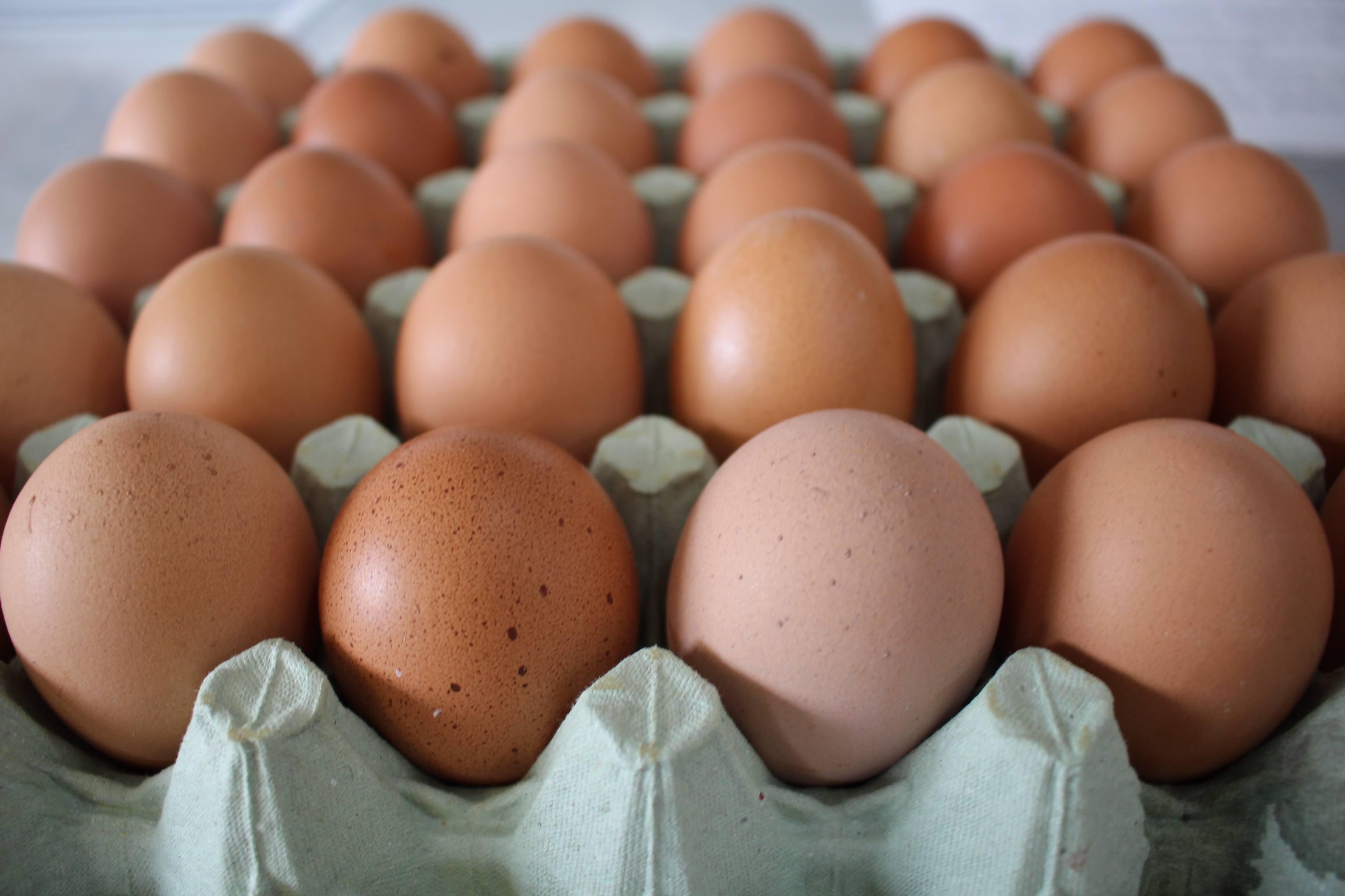 Eggs k