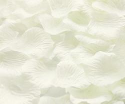 Ivory Rose Petals