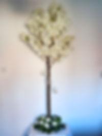 blossom web_n(1).jpg