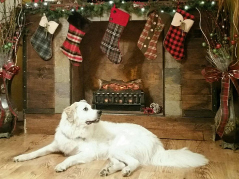 Gift Ideas for Pet-Lovers