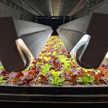 Seedling under grow lights